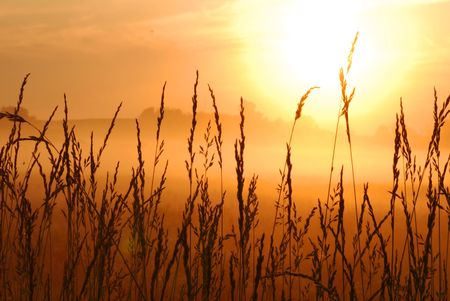 beautiful morning sunrise with wheat grass in the foreground  Stock Photo - 2924513