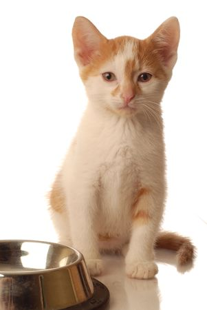 weeks: white and orange kitten sitting beside an empty bowl of food