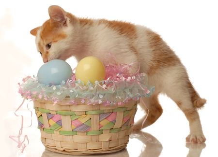 white and orange kitten and an easter basket  photo