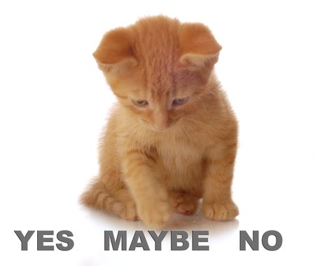 maybe: little kitten choosing between yes no and maybe