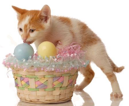 white and orange kitten with an easter basket photo