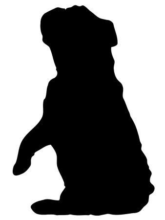 british bulldog: silhouette of english bulldog sitting pretty or begging - illustration Illustration