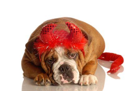 diable rouge: bulldog anglais d�guis� comme un diable rouge Banque d'images