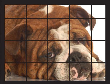 english bulldog behind a wire dog cage photo