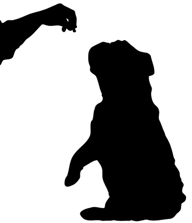 dog treat: silhouette of english bulldog sitting up begging for a treat