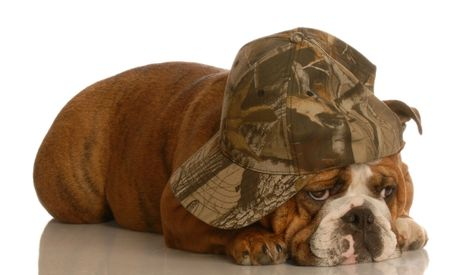 english bulldog lying down sleeping wearing camouflage ball cap Stock Photo - 3724523