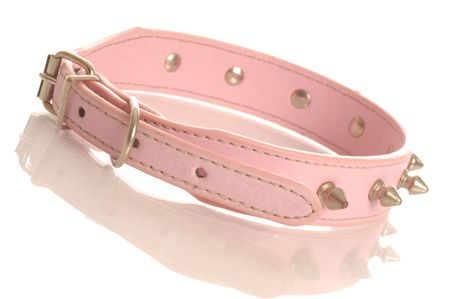 dog tag: pink leather dog collar with metal studs isolated on white background