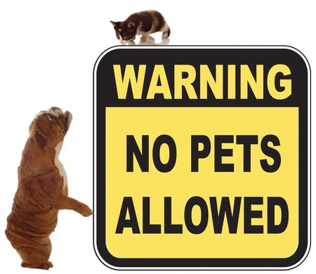 dog and cat chase in a no pets allowed sign Stock Photo