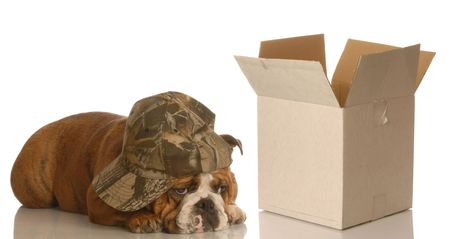 depressed dog lying beside empty box - concept for moving, packing, shipping Stock Photo