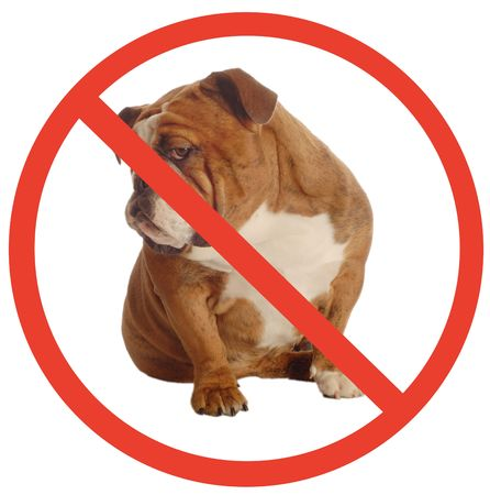 no dogs allowed sign with an annoyed english bulldog as the dog photo