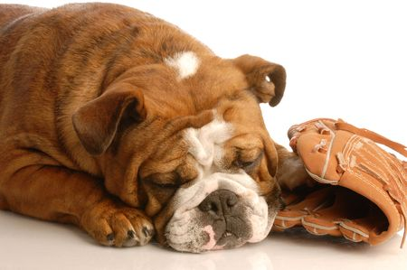 english bulldog sleeping with baseball and baseball glove photo
