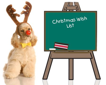 pampered: american cocker spaniel dressed up as rudolph sitting beside chalkboard with christmas wish list