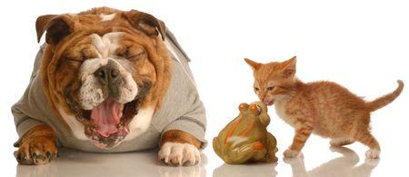 english bulldog laughing at small kitten kissing a toad Stock Photo - 3986965