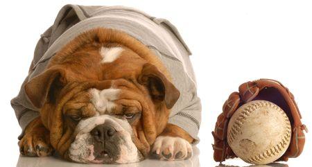 english bulldog puppy: english bulldog wearing sweatsuit with baseball glove Stock Photo