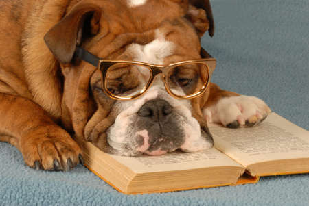 dog school: english bulldog reading novel - dog obedience school