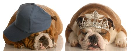 cute couple - one english bulldog wearing ball cap and the other wearing tiara  photo