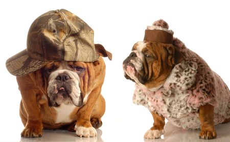 funny elderly looking dog couple dressed in farmers hat and old ladies fur coat and hat photo