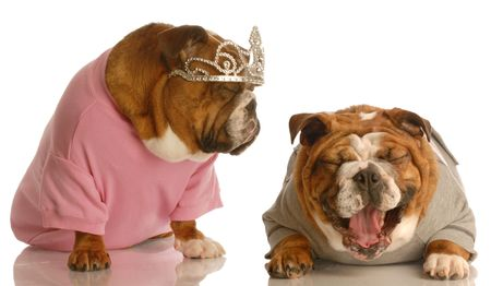 english bulldog laughing at another dog dressed up with tiara on