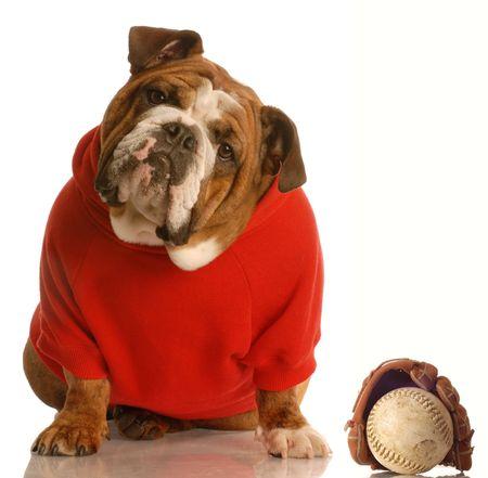 sports hound - english bulldog with baseball and glove photo