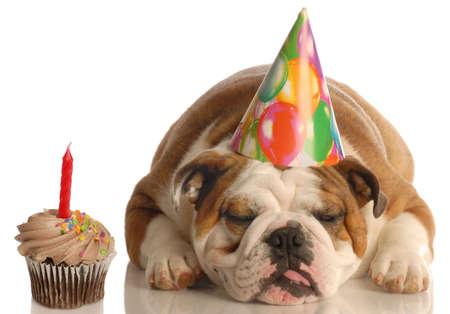 bajo y fornido: Parte aguafiestas - Ingl�s bulldog con sombrero de fiesta de cumplea�os al lado de chocolate, por la que se Cupcake