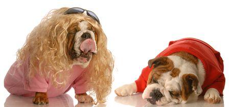 suitor: bionda bulldog inglese di anticipi in un disinteressato pretendente