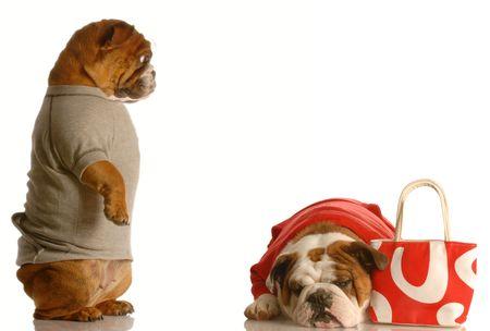 spending money: spending too much money - english bulldog couple stressing over spending money