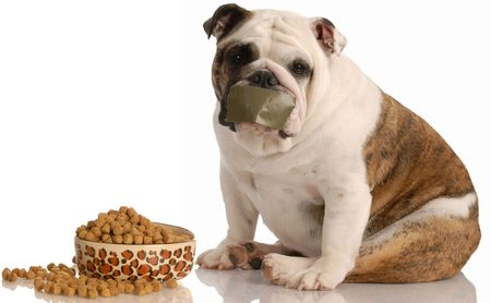 dog on a diet - english bulldog sitting beside full bowl of food with tape across mouth photo
