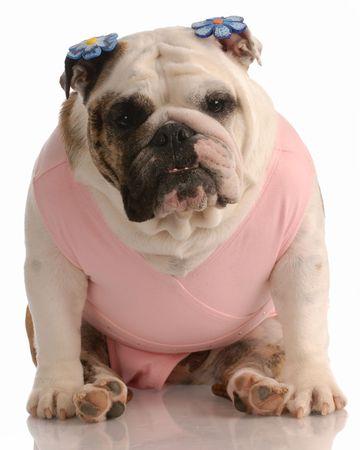 barrettes: bulldog inglese indossando tutu rosa con mollette fiore