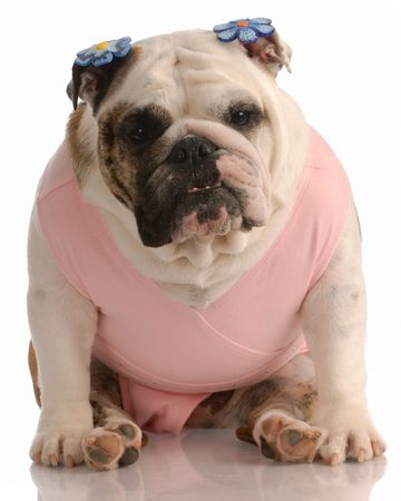 barrettes: english bulldog wearing pink tutu with flower barrettes