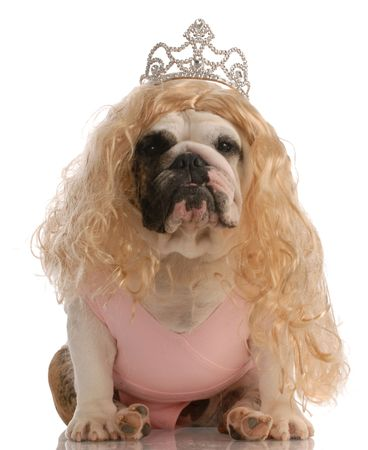 english bulldog dressed up as princess with ugly wig and tutu