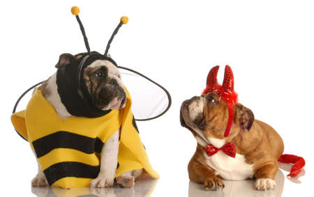 stocky: two english bulldogs dressed up as a bee and devil