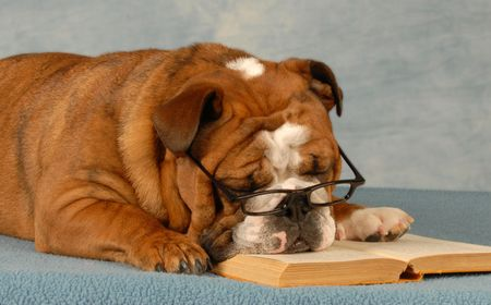 earnest: bulldog ingl�s durmiendo con gafas y una novela de lectura  Foto de archivo