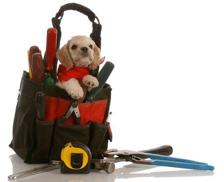 american cocker spaniel puppy sitting inside tool kit photo