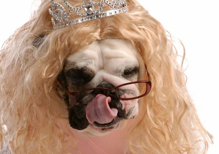spoiled dog - dog dressed up with blonde wig and tiara Stock Photo - 5585452