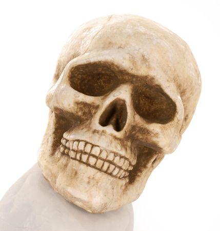 reflection: skull skeleton with reflection isolated on white background