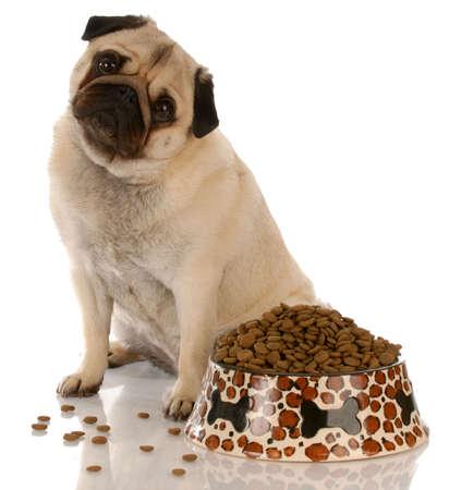 perro comiendo: pug sentado al lado de un cuenco lleno de comida para perros  Foto de archivo
