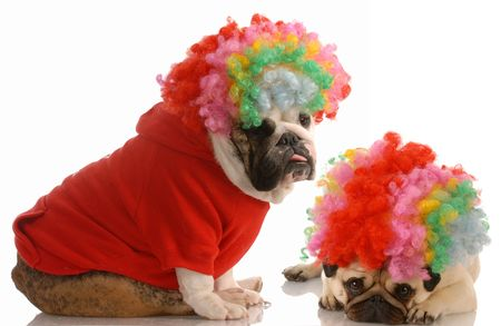 conformation: english bulldog and pug dressed up as clowns Stock Photo