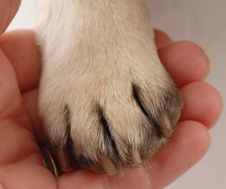 veterinary care - persons hand holding dog paw Stock Photo - 5728061