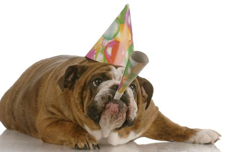wish: english bulldog birthday dog wearing hat and blowing on horn