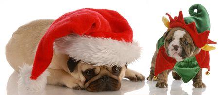santas helpers - pug dressed as santa and english bulldog puppy dressed as elf photo
