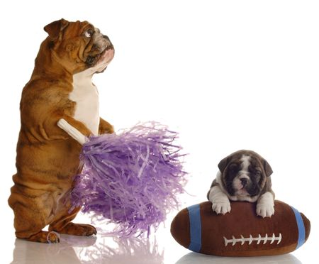 english bulldog cheerleader standing beside puppy sitting on football photo