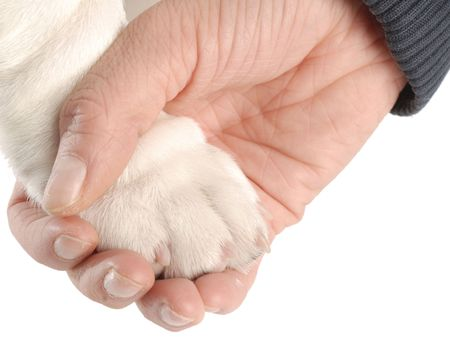persons hand holding on to dog paw on white background photo