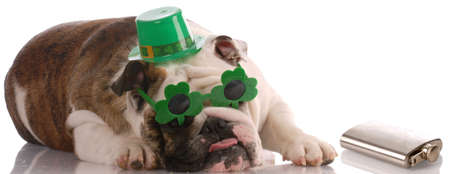 St. Patricks Day dog Stock Photo - 6392728