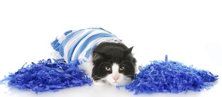 cheerful cat photo