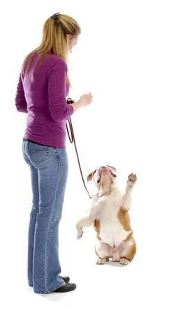 obedience: bulldog ingl�s que suplicando una delicia de controlador de mujer sobre fondo blanco