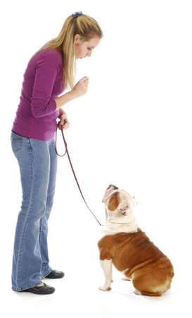 obedience training - woman teaching english bulldog to sit on white background photo