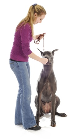great: dog obedience - woman teach great dane to sit with treats on white background Stock Photo