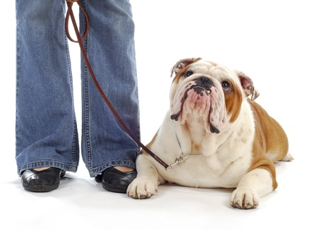 obedience training - woman standing beside bulldog laying down looking at handler photo