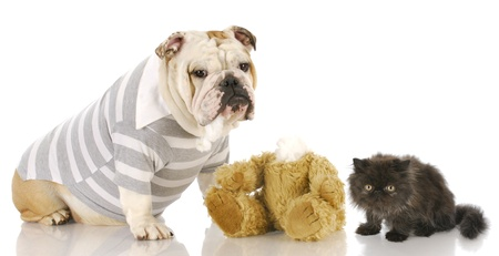 kitten with scared expression sitting beside agressive bulldog with reflection on white background photo