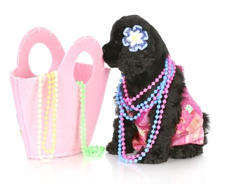 collares: mujer cocker spaniel puppy vistiendo Rosa sentado al lado de Rosa bolso lleno de perlas
